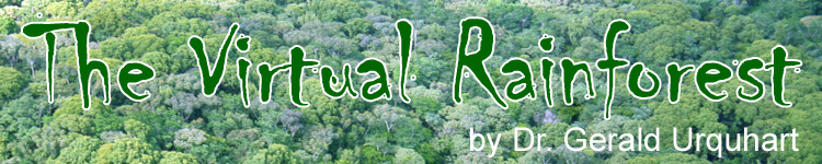 The Virtual Rainforest